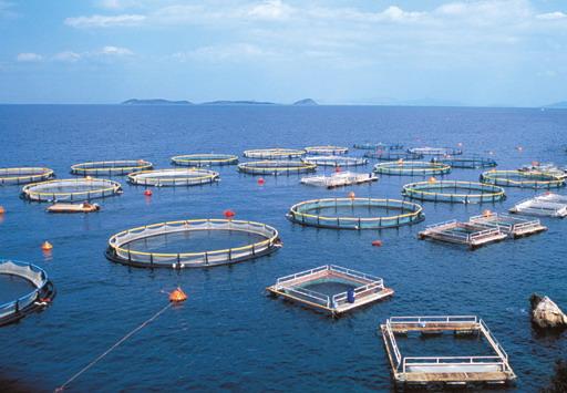 Κορωνοϊός: Μέτρα τόνωσης της ρευστότητας λόγω μείωσης εξαγωγών ζητούν οι υδατοκαλλιεργητές