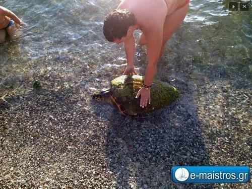 Κολυμπώντας στην Αμφιλοχία συντροφιά με την Caretta-Caretta
