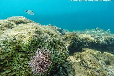 Φωτογράφηση κάτω απο το νερό στην παραλία Ασπρογυάλι Αστακού