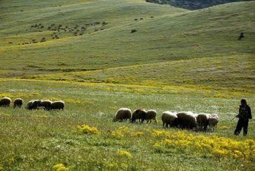 Γ. Βαρεμένος: Θα υπάρξει νέα προκήρυξη για τη βιολογική κτηνοτροφία
