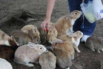 Πόσα οικόσιτα ζώα μπορείτε να διατηρείτε στην Αιτωλοακαρνανία