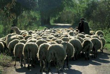 Συζητήθηκε η  ερώτηση Βαρεμένου για τα προβλήματα της κτηνοτροφίας