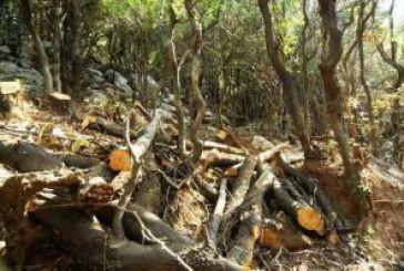200 τόνοι παράνομης ξυλείας στον Θύαμο
