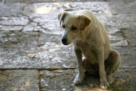 Στο αυτόφωρο για κακοποίηση σκύλου
