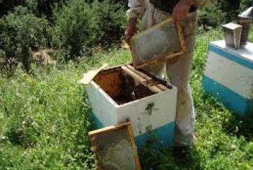 Στη Βουλή η «δραματική μείωση των μελισσών στην Αιτωλοακαρνανία»