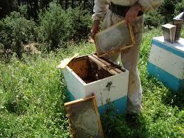 """Στη Βουλή η """"δραματική μείωση των μελισσών στην Αιτωλοακαρνανία"""""""