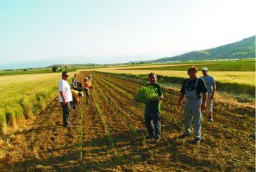 Μειώνονται οι εκτάσεις που καλλιεργούνται