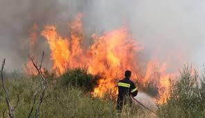 Δασική πυρκαγιά στην Παλαιομάνινα
