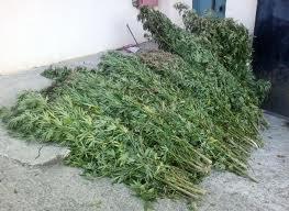 Γαλατάς: ποσότητες ναρκωτικών στο σπίτι των τριών αδερφών