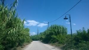 Καλαμιές… κρύβουν το δρόμο για το «Χαμόγελο»