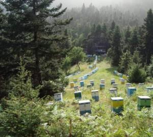 Χάνονται οι μέλισσες και στην περιοχή μας