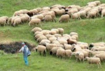 33 εστίες καταρροϊκού πυρετού στην Αιτωλοακαρνανία