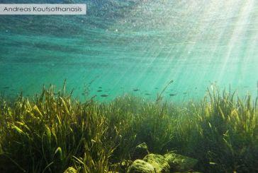Η Τριχωνίδα κάτω από το νερό: Υποβρύχιες φωτό της λίμνης!