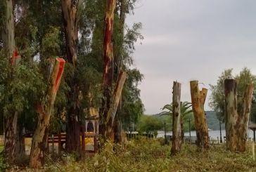 Πετσόκοψαν τα δέντρα στη Βόνιτσα (φωτο)