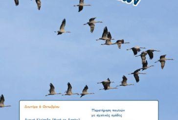 Εκδήλωση- παρατήρηση πουλιών στην περιοχή της Κλείσοβας