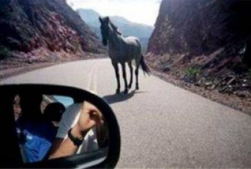 Τράκαρε με άλογο που έπεσε από αγροτικό φορτηγάκι!