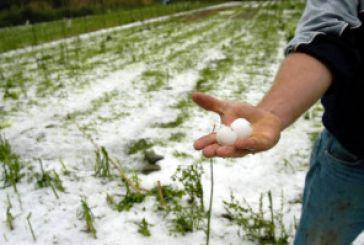 Το χαλάζι έφερε καταστροφή στις καλλιέργειες