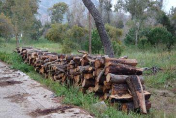 200 τόνοι παράνομης ξυλείας κατασχέθηκαν στον Ορεινό Βάλτο