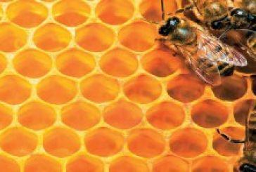 Νέα σελίδα για τους μελισσοκόμους