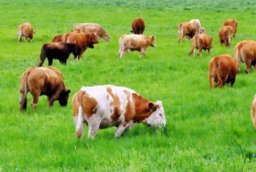 Σύσκεψη το Σάββατο 16/9 στο Δημαρχείο Βόνιτσας για τα μεγάλα προβλήματα της κτηνοτροφίας