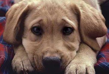 Ανασύσταση της Επιτροπής παρακολούθησης του προγράμματος διαχείρισης αδέσποτων ζώων του Δήμου Αγρινίου
