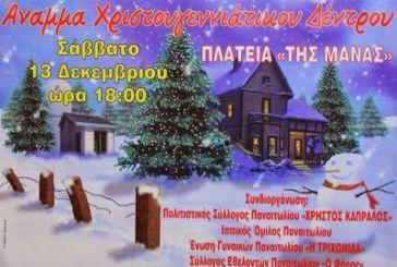 Σήμερα η φωταγώγηση χριστουγεννιάτικου δέντρου στην «Πλατεία της μάνας» Παναιτωλίου