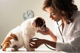 Ανακοίνωση πρόσκλησης ενδιαφέροντος προς ιδιώτες κτηνιάτρους