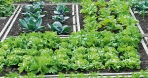 Γιατί αλλάζει θέση ο Δημοτικός Λαχανόκηπος