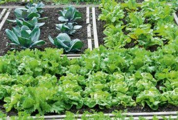Δίμηνες προσλήψεις στον Δημοτικό Λαχανόκηπο Αγρινίου