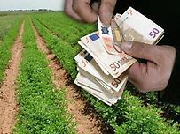 Ερώτηση Σαλμά για την απαλλαγή φορολόγησης αγροτικών επιδοτήσεων και αποζημιώσεων