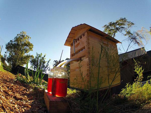 Κυψέλη συλλέγει το μέλι αυτόματα χωρίς ενόχληση των μελισσών!