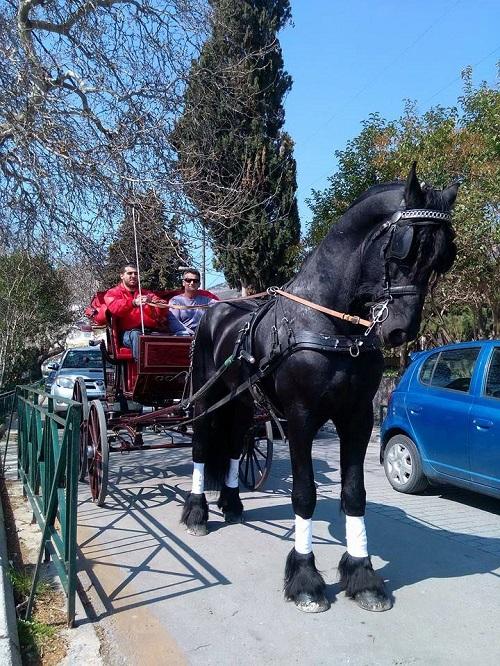 άλογα-Ναύπακτος