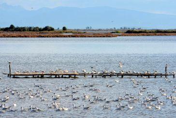 Ημερίδα: «Τα πουλιά της Ελλάδας και ιδιαίτερα του Εθνικού Πάρκου Λιμνοθάλασσας Μεσολογγίου»