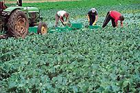 Χάος με τα φορολογικά στοιχεία των αγροτών