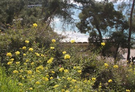 Δυτική Ελλάδα: Αισιοδοξείτε! Η άνοιξη καταφθάνει το επόμενο 15νθημέρο!