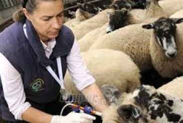 Εκπαιδευτικό σεμινάριο για κτηνιάτρους για ελέγχους σε μονάδες υδατοκαλλιέργειας
