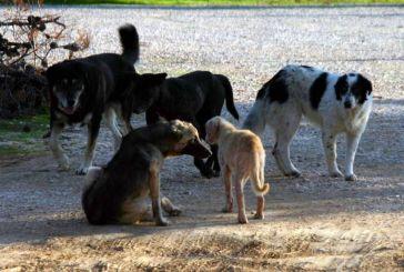 Eνδιαίτημα παραμονής αδέσποτων σκύλων στην περιοχή του Αγρινίου