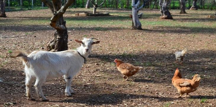 Τι πραγματικά ισχύει για τα οικόσιτα ζώα