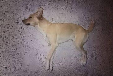 Δικογραφία για φόλα σε σκύλο στο Μεσολόγγι