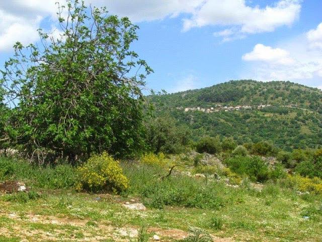 Ερείπια και μνήμες από το άλλοτε βλαχόφωνο χωριό Νουσέικα