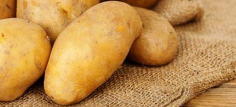 Έχουν και τα καλά τους οι πατάτες…
