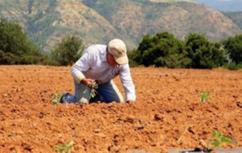 Eρώτηση Σαλμά για τις βιολογικές καλλιέργειες