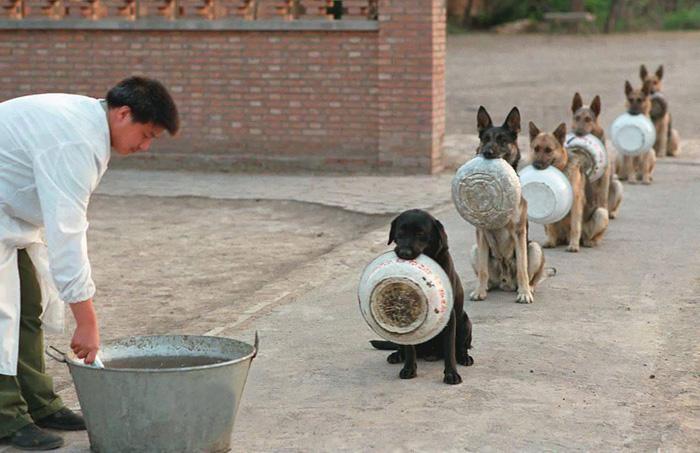 chinadogpolice