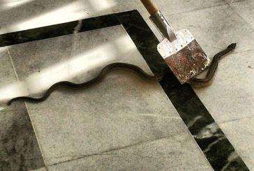 Φίδι 1,5 μέτρο στα γραφεία του ΕΠΑΛ Αμφιλοχίας