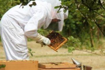 Μέχρι 31/12 οι δηλώσεις διαχείμασης των μελισσών