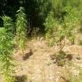 Όπως έχει ήδη μεταδώσει το agrinionews.gr, συνελήφθησαν τρία άτομα στην...