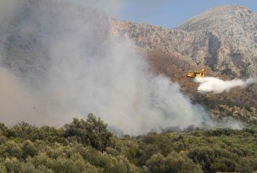 Μάχη με τις φλόγες στην Πάλαιρο- σε ύφεση η πυρκαγιά  (φωτό)