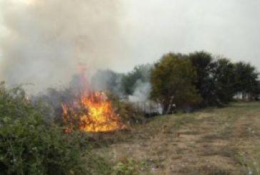 Φωτιά σε λιοστάσι