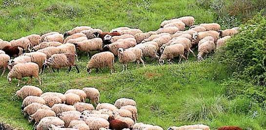 ΔΑΟΚ Αιτωλοακαρνανίας: υποχρεωτική η απογραφή και κοινοποίηση των στοιχείων του ζωικού κεφαλαίου