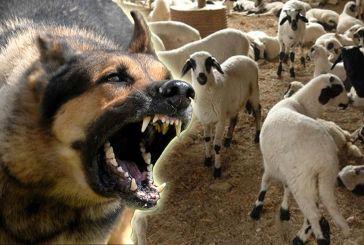 Ξηρόμερο: Συνελήφθη για την παρανομία των… σκύλων του